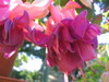 Fleurs_2007_012
